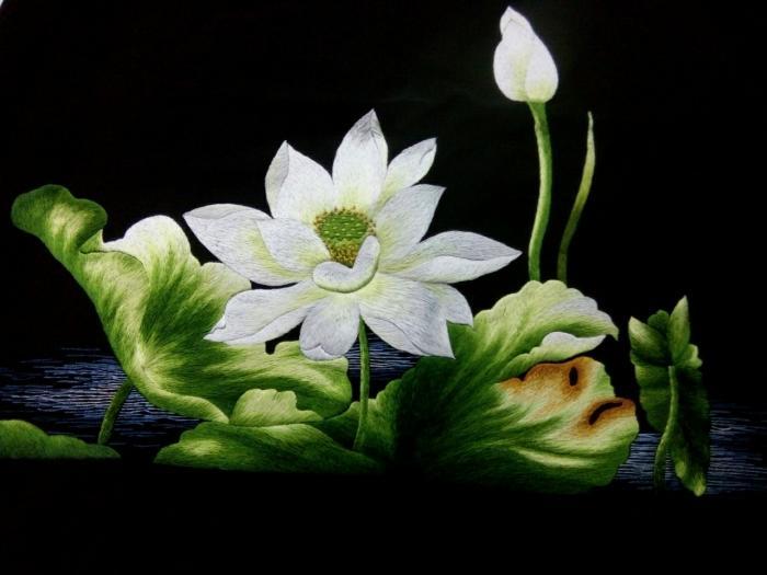 y nghia cua hoa sen